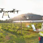 Technician_farmer_use_wifi_computer_control_agriculture_drone_fly_to_sprayed_fertilizer_on_grape_field,_Smart_farm_concept