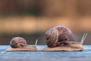 Snails_race_big_first